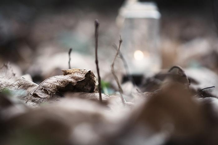 bosque-93